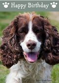 English Springer Spaniel-Happy Birthday (No Theme)